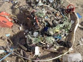 Macro and microplastics present on a beach near Edinburgh Scotland